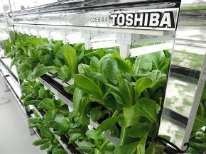 toshiba_creenroomfarm-yokosuka_image.jpg