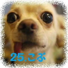 24.こぶ