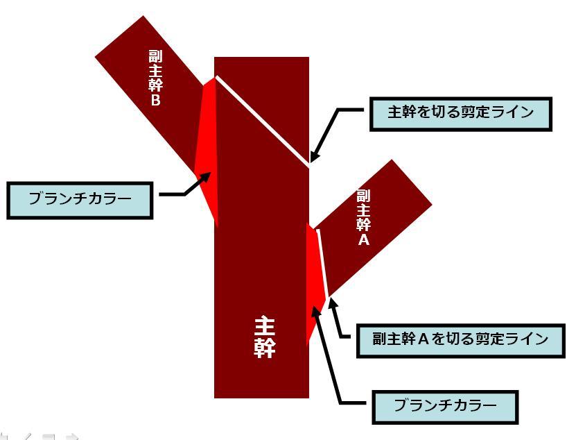 バークリッジ剪定法