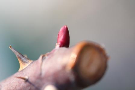 シャリファ・アスマの筍