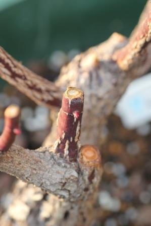 ガブリエルの筍