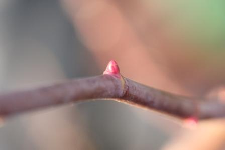 国色天香の筍