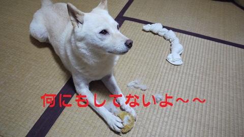P1070317.jpg