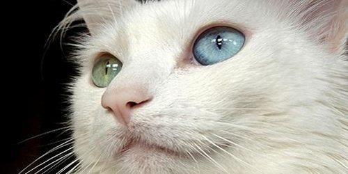 コロプラ猫プロジェクトと新作