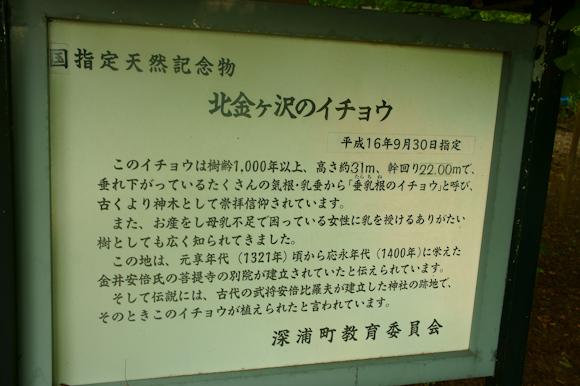 DSC04331.jpg