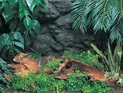 密林の神秘 アマゾン600