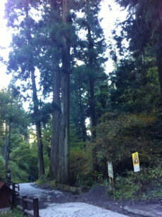 fc2blog_201211180114469af.jpg