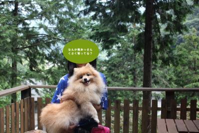 おっさんくさい顔の犬~