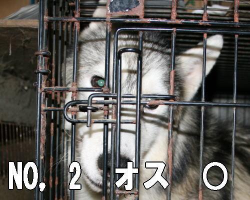 201207262059050e1.jpg