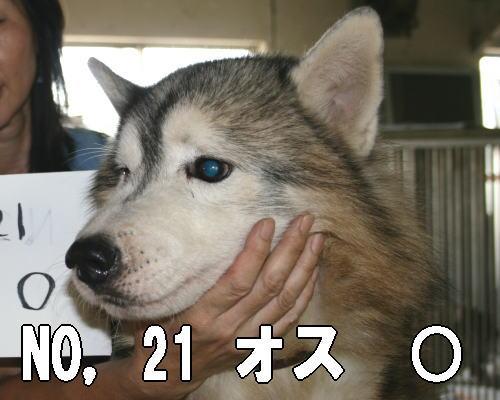 20120726210224424.jpg