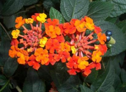 なんという名の花