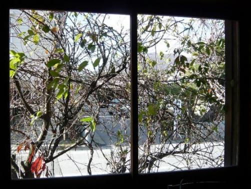 冬到来…窓