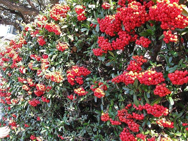 山手十番館 垣根の赤