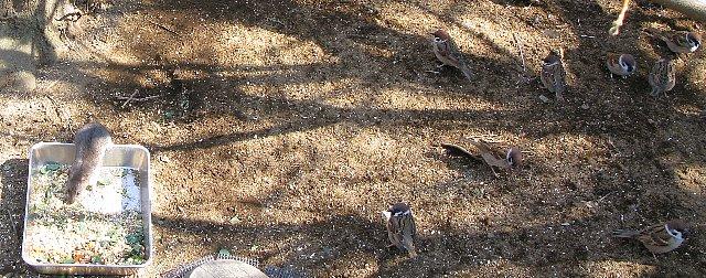 ズーラシア 鼠と雀