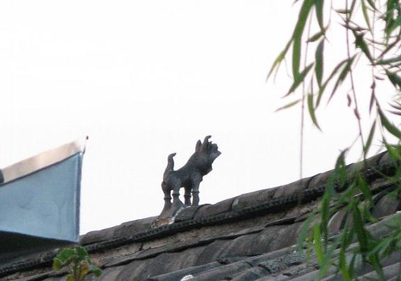 麗江古城 屋根に犬