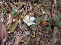 春の花 バラ苺