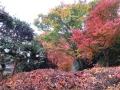 てんこ盛り紅葉