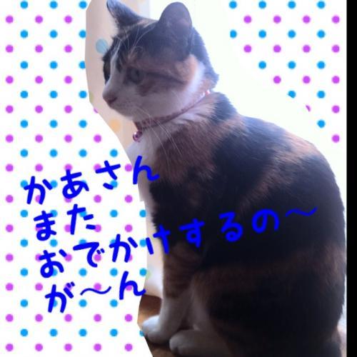 IMG_1678_convert_20120927092930.jpg