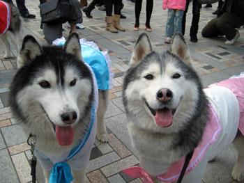 トリュ子&ポト子