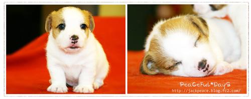 puppy_peace.jpg