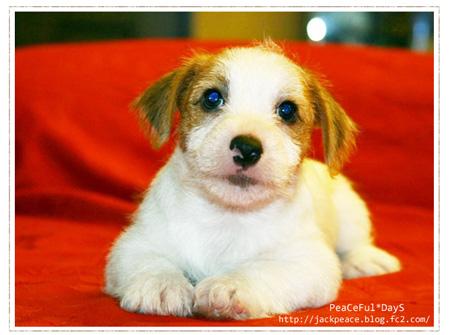 puppy_peace1.jpg