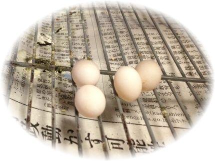 2013-12-01 産卵