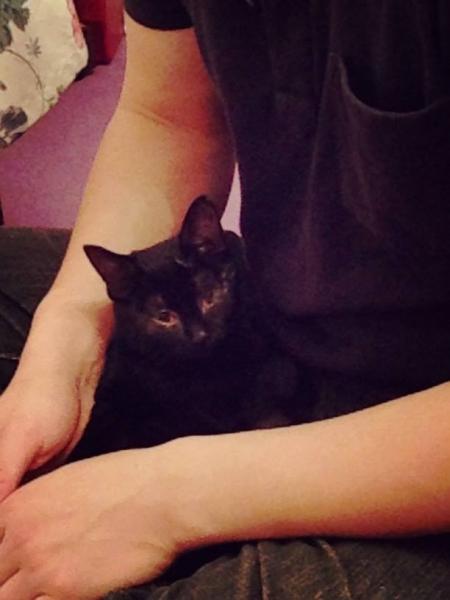 9月生まれの黒猫女子里親決定