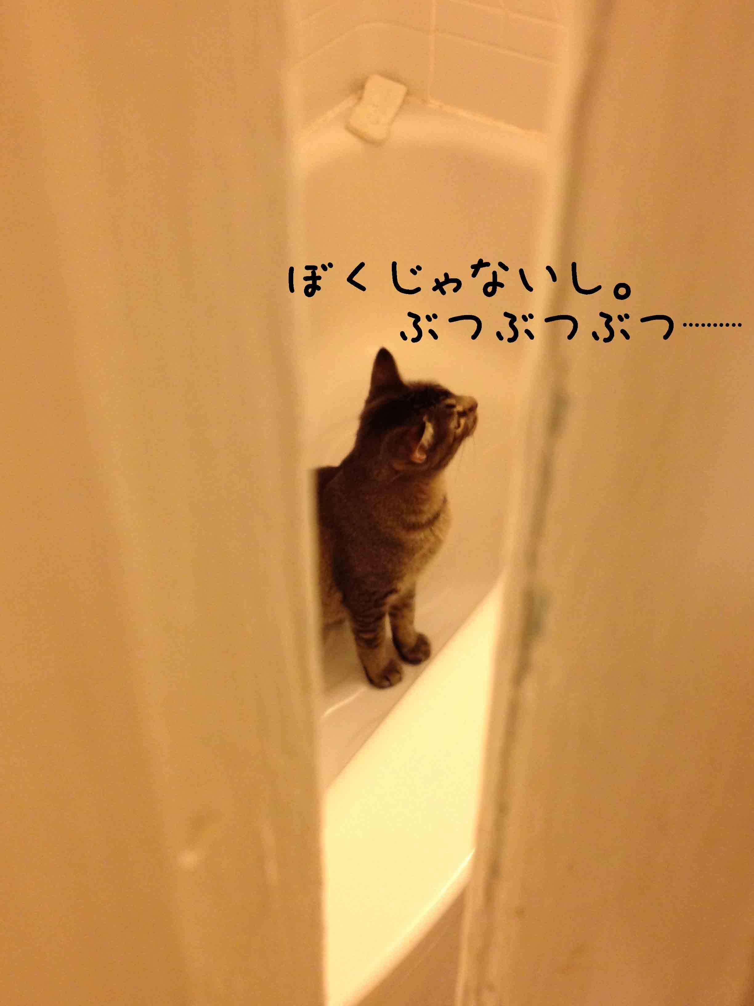 201209120320185c2.jpg