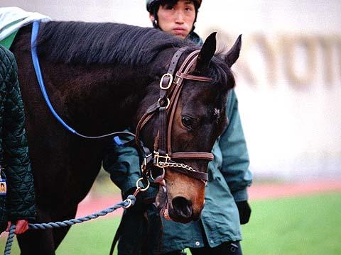 【神競馬】2000年 根岸ステークス ブロードアピールの鬼脚