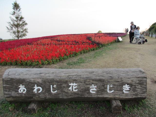 あわじ花さじき2013年11月-3