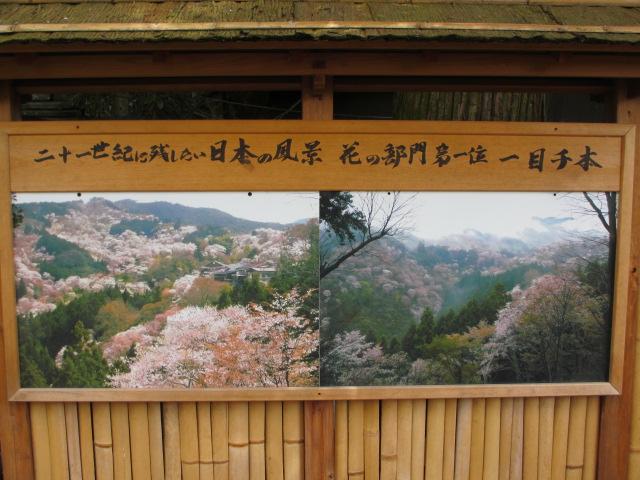 吉水神社(一目千本)5