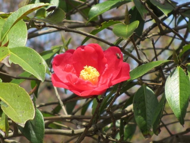 竹林院群芳園8