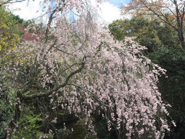 竹林院群芳園10