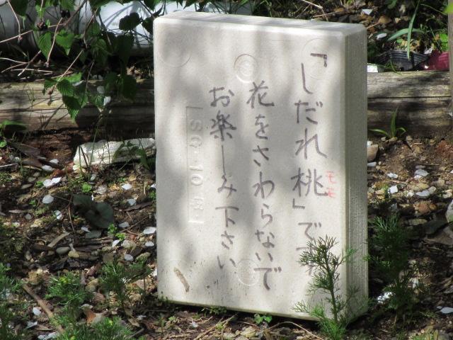 竹林院群芳園~花矢倉展望台(しだれ桃)2