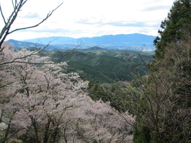 上千本の桜15