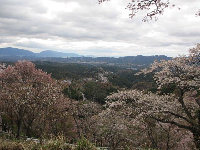 上千本の桜9