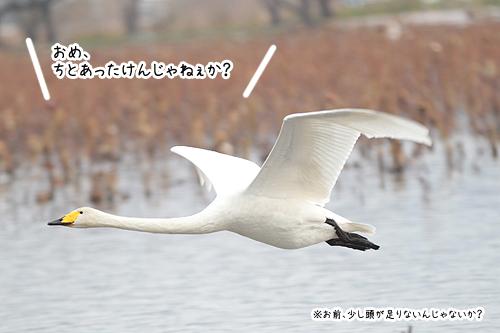 20112122007.jpg