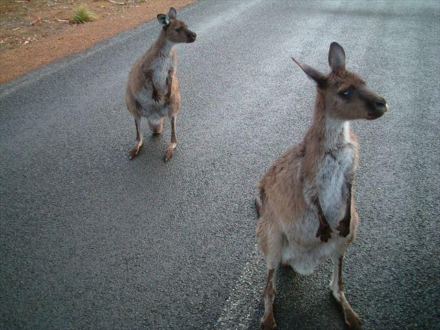 野生動物・・・よりも動物園!? 私の海外渡航履歴17 オーストラリア