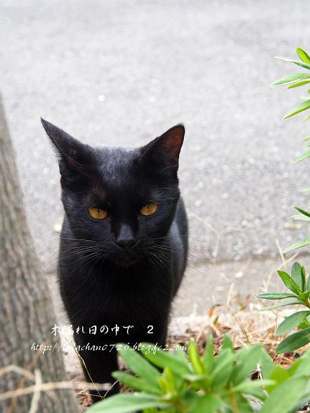 黒ネコさん 2
