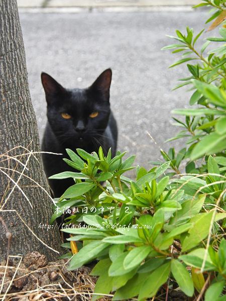 黒ネコさん 1