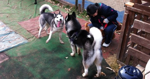fc2blog_201212211308184b0.jpg