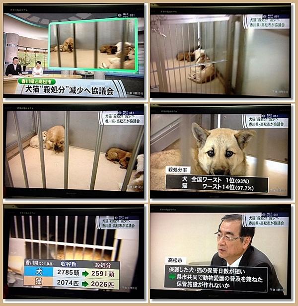 動物の殺処分
