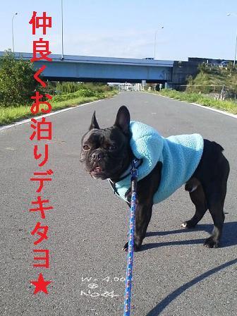 1_20121017224915.jpg