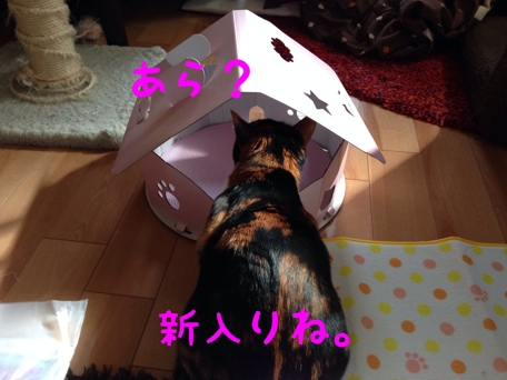 fc2blog_20140206134746636.jpg