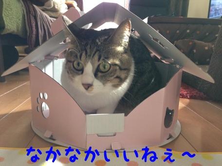 fc2blog_20140206134938303.jpg