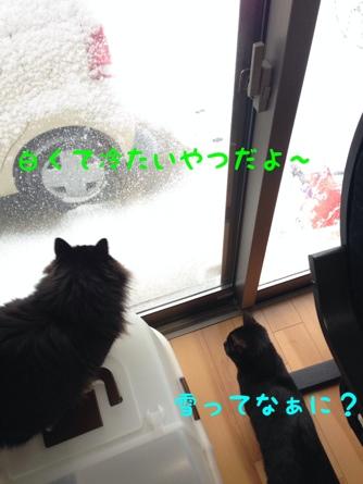 fc2blog_201402101451430ff.jpg