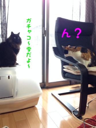 fc2blog_20140210145253f4e.jpg