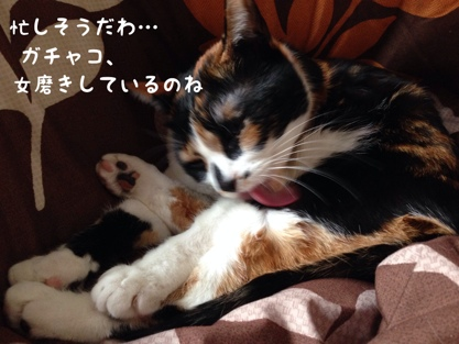 fc2blog_201402191156286fb.jpg