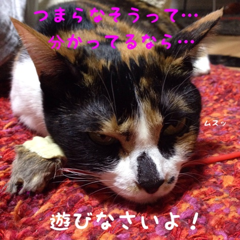 fc2blog_20141031151922220.jpg