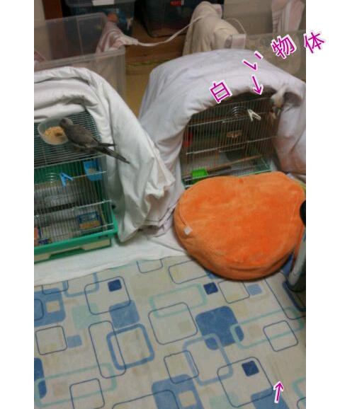 20121109-220537.jpg
